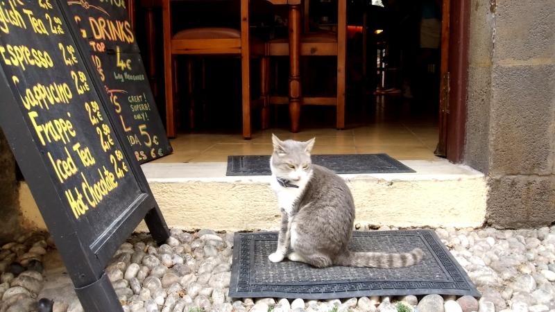 Rodos - Taverna cat