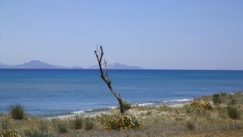 Kos - Tree. Kardamena beach